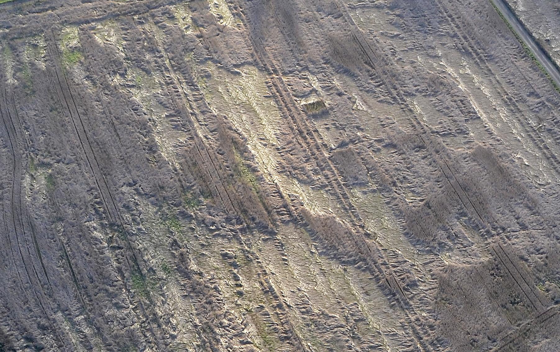 Viikonlopulta pari kuvaa miltä näyttää pahimmillaan puimaton viljapelto tänä syksynä.