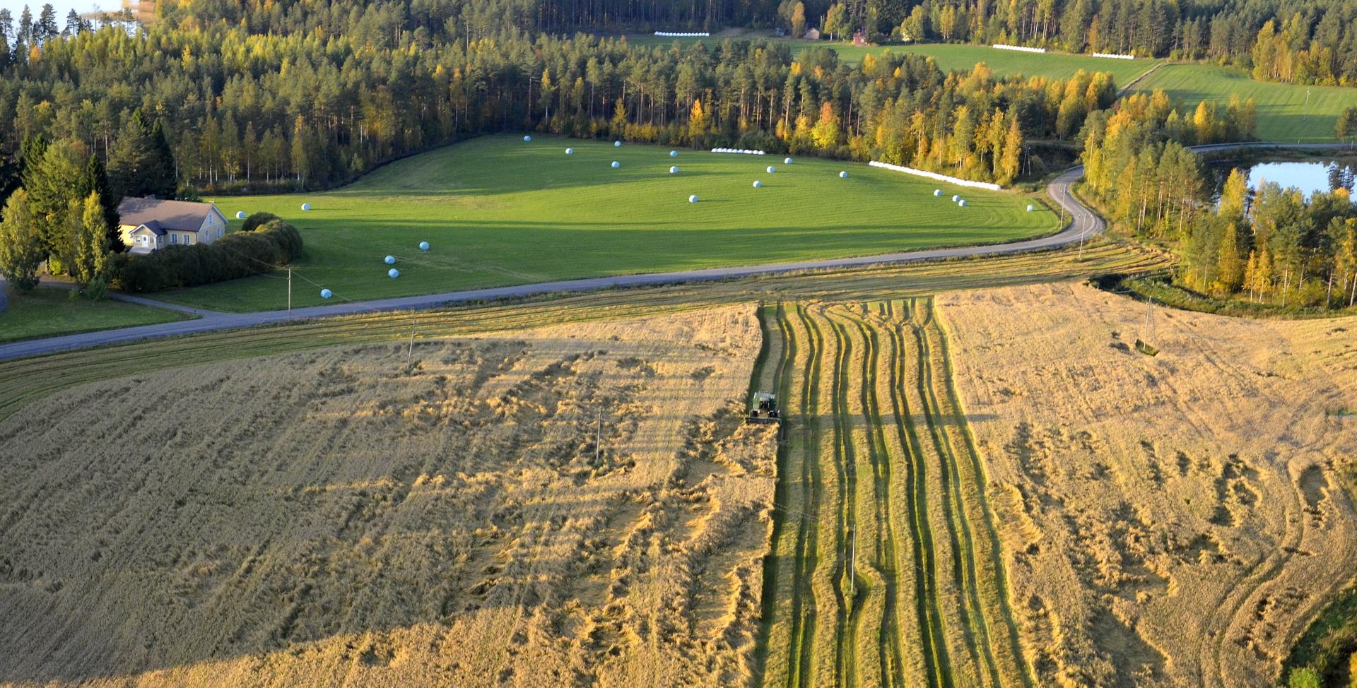 Syksyn harvoja aurinkoisia puintipäiviä 25.9.17. Puinti käynnissä Kannaksen pellolla.