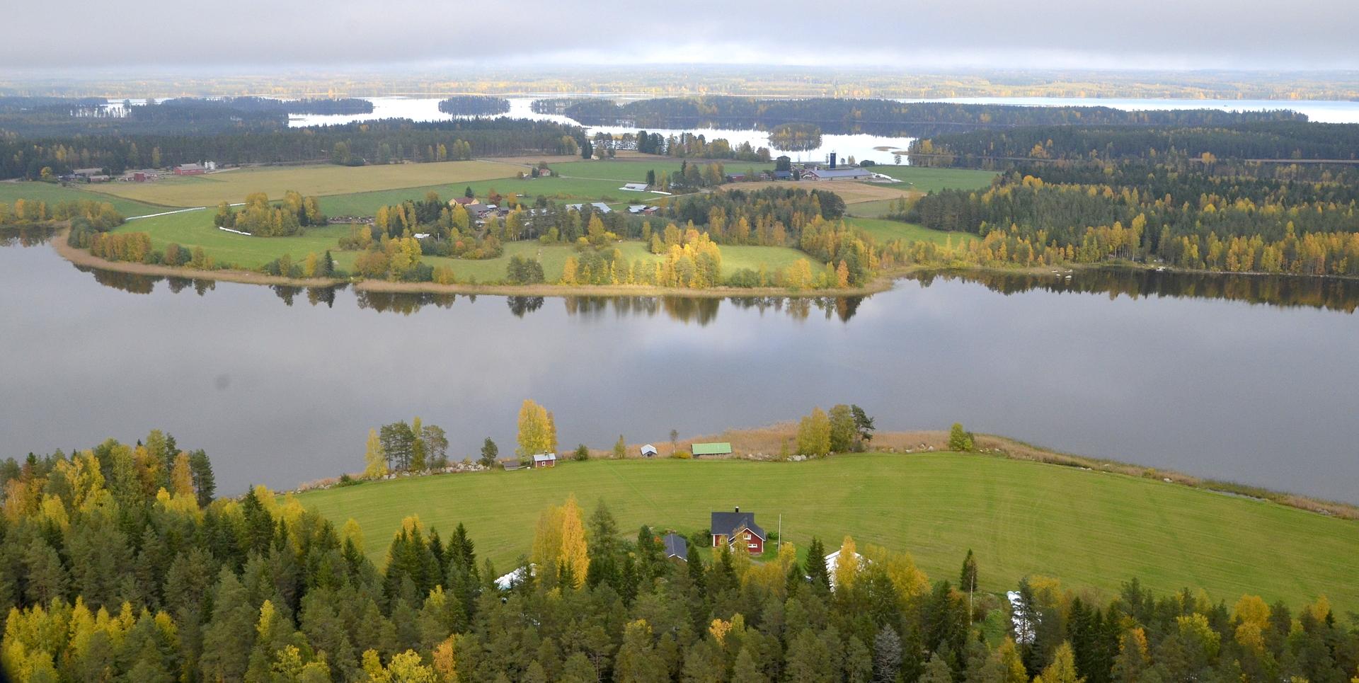 Pasalajärven rantuuksia, lähimpänä Järventaus.
