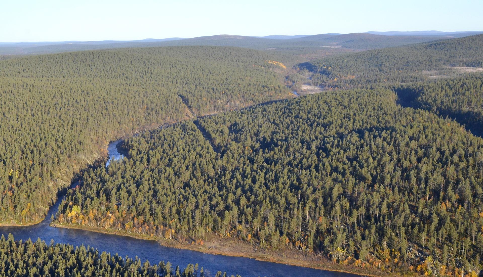 Taimenjoki liittyy Ivalojokeen hieman Kutturan etelän puolelta.