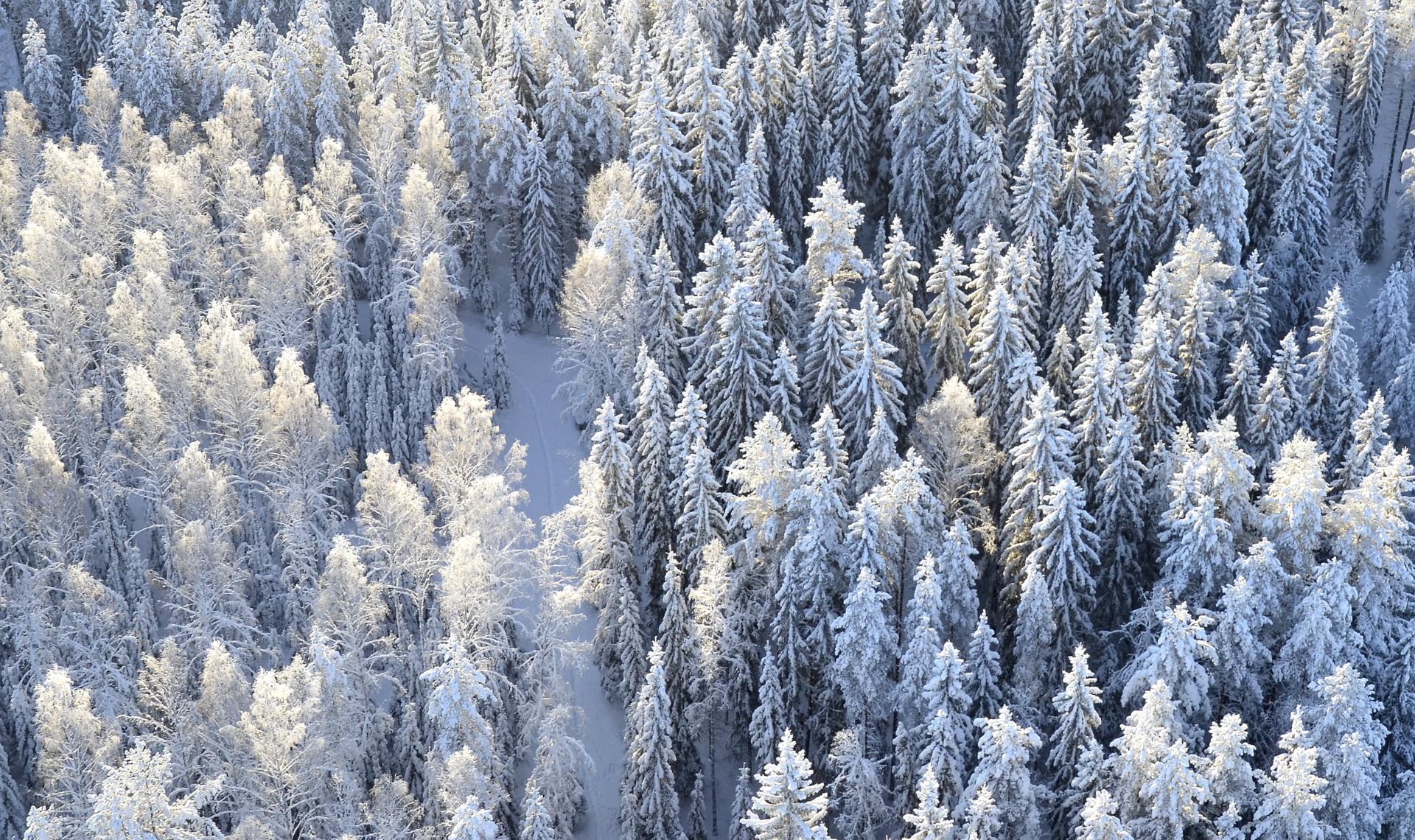 Metsä on vaan nyt niin hieno:)