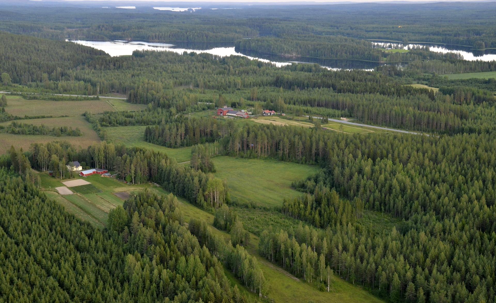 Kotvalankylää ja Komujärvi. Kuvasta voi löytää paikallisen mökkeilijän ilmassa.