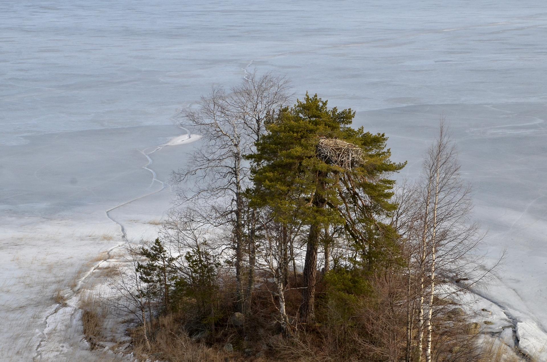 Koivuselän Yksipuisen ja Kalasääksen pesä. Toinen saman niminen saari on myös Räihänselällä.