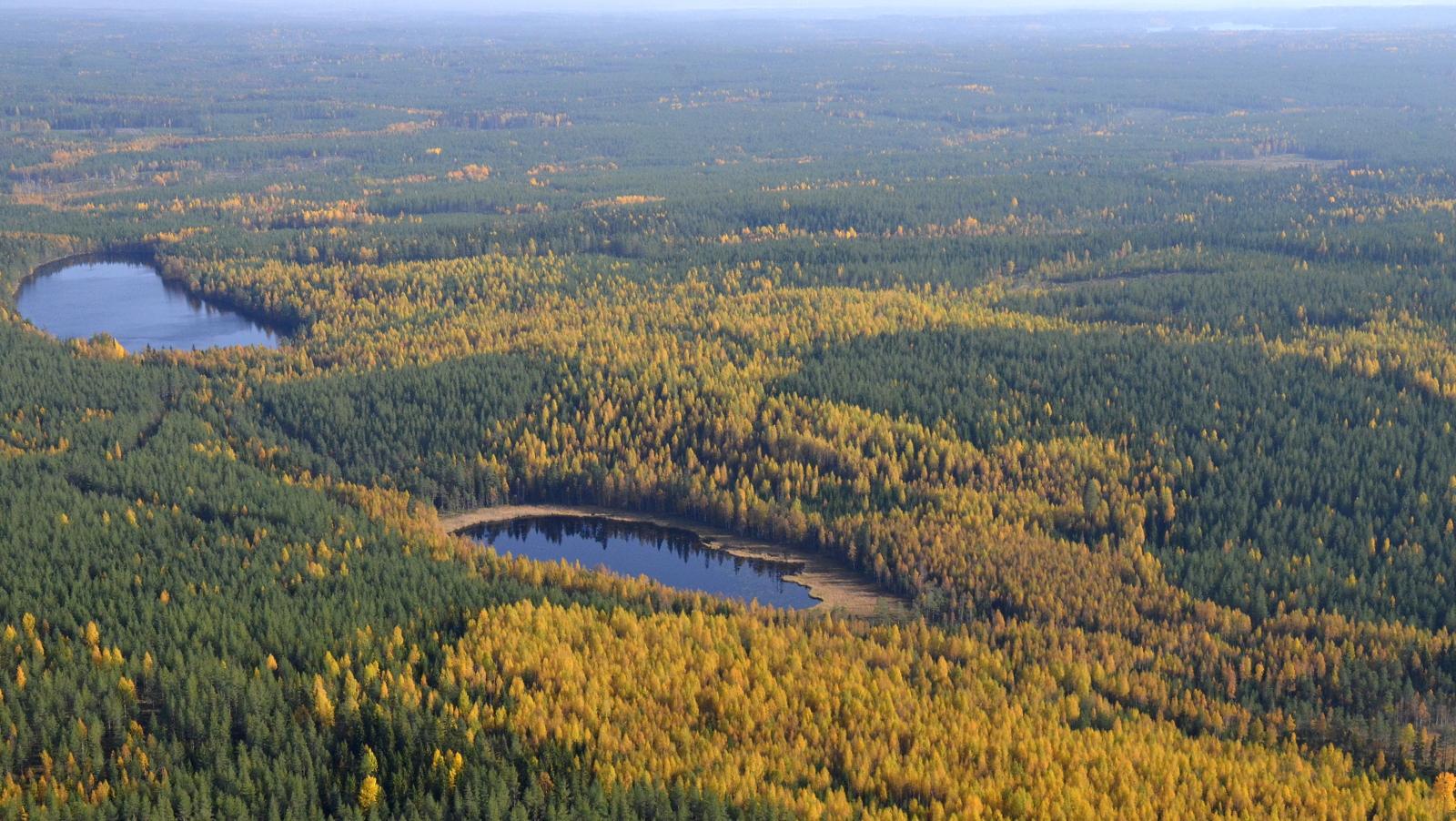 Pirttilampi ja Mustalampi (152m meren pinnasta). Tuulipuiston aluetta lampien takana. Oikealla siintää Iisjärvi Konginkankaalla