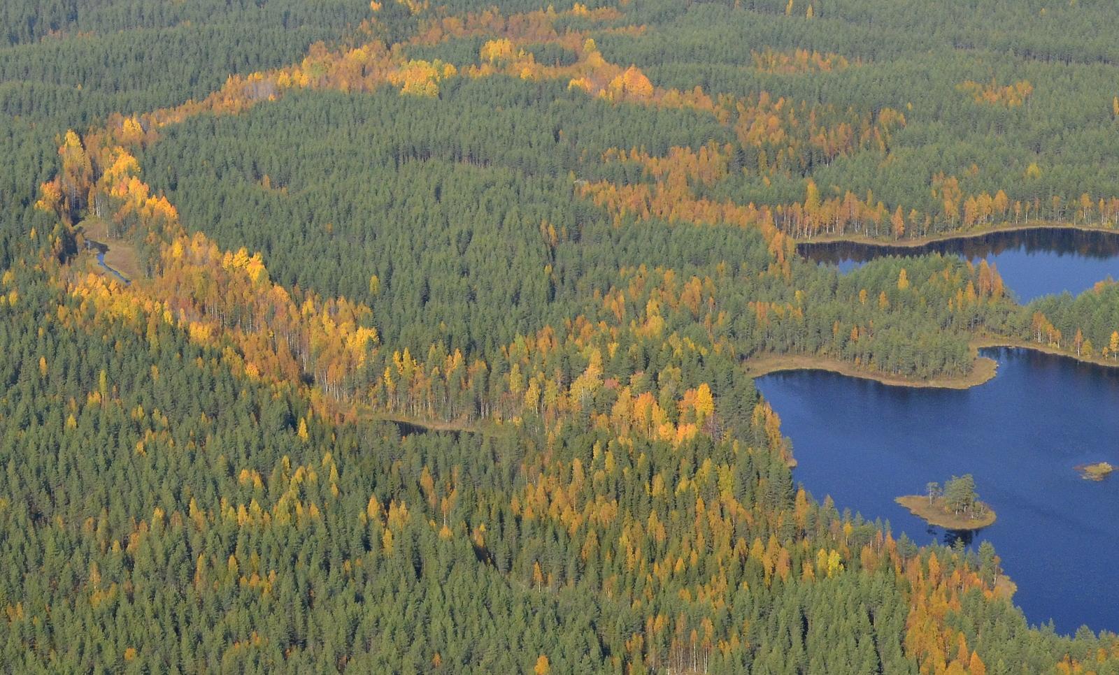 Koukkujärven vedet laskee vasemmalla näkyvää puroa pitkin Vuosjärveen.