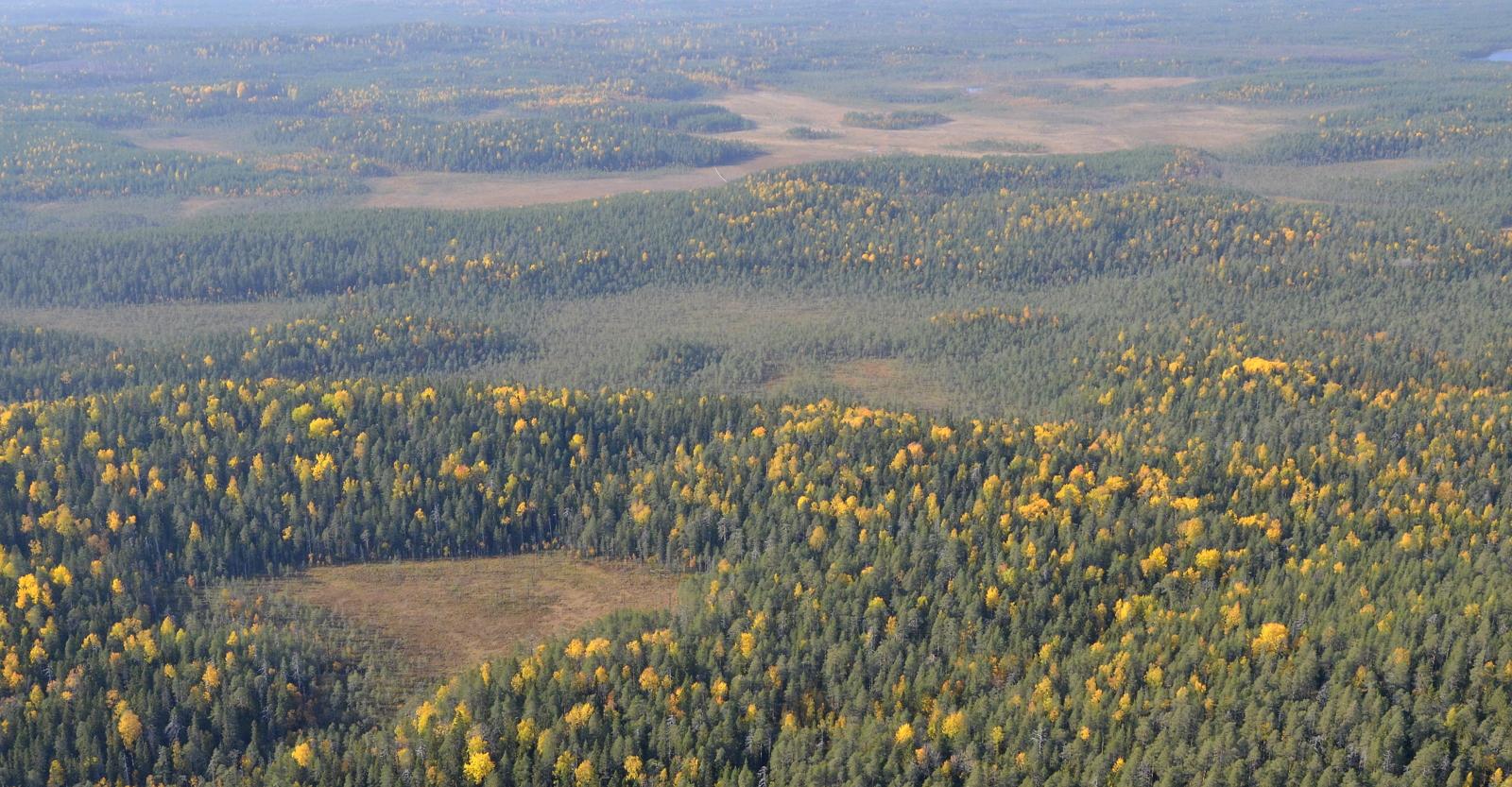 Pitkospuita näkyy alueella.