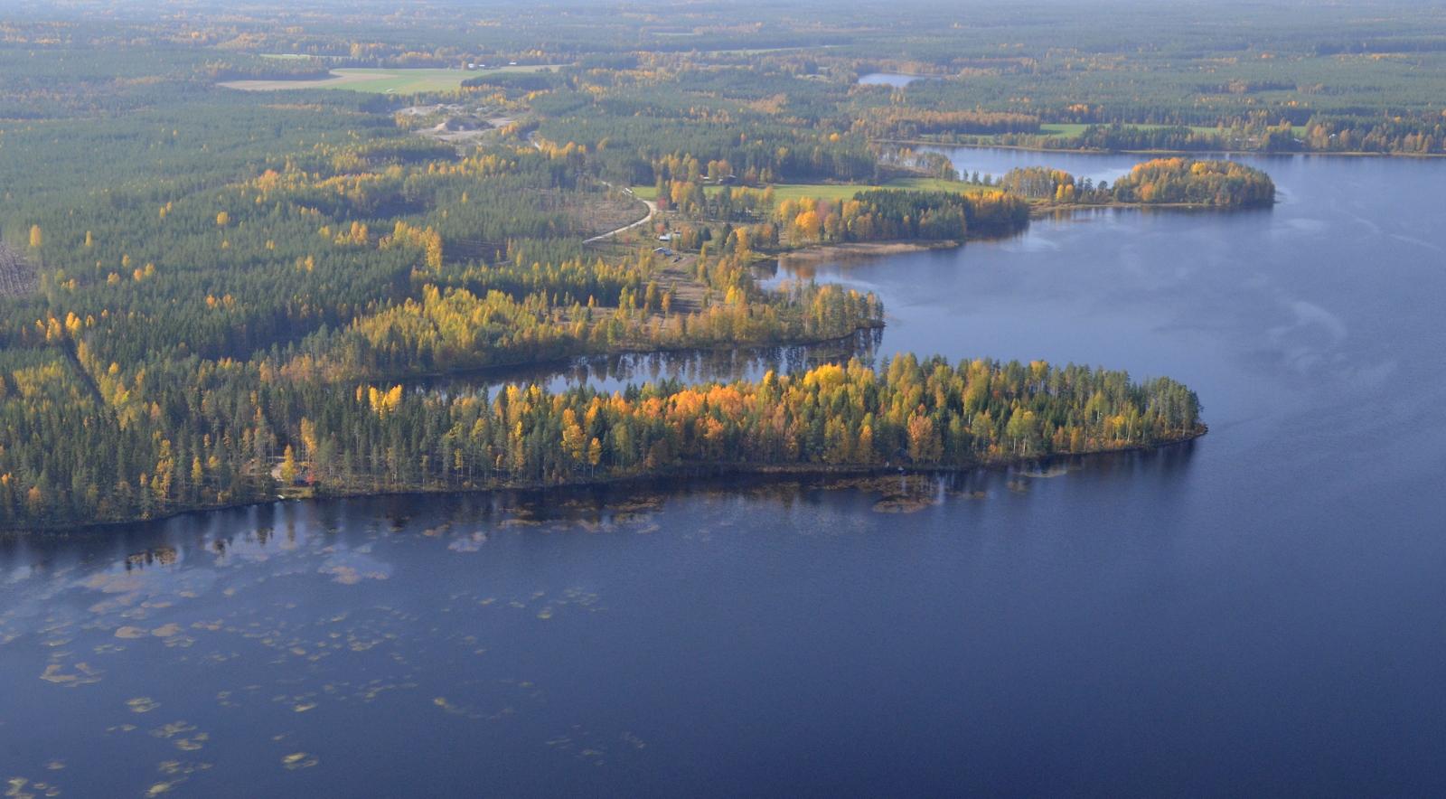 Iso Suojärven Koivikkoniemi. Taustalla näkyy Pieni Suojärvi.