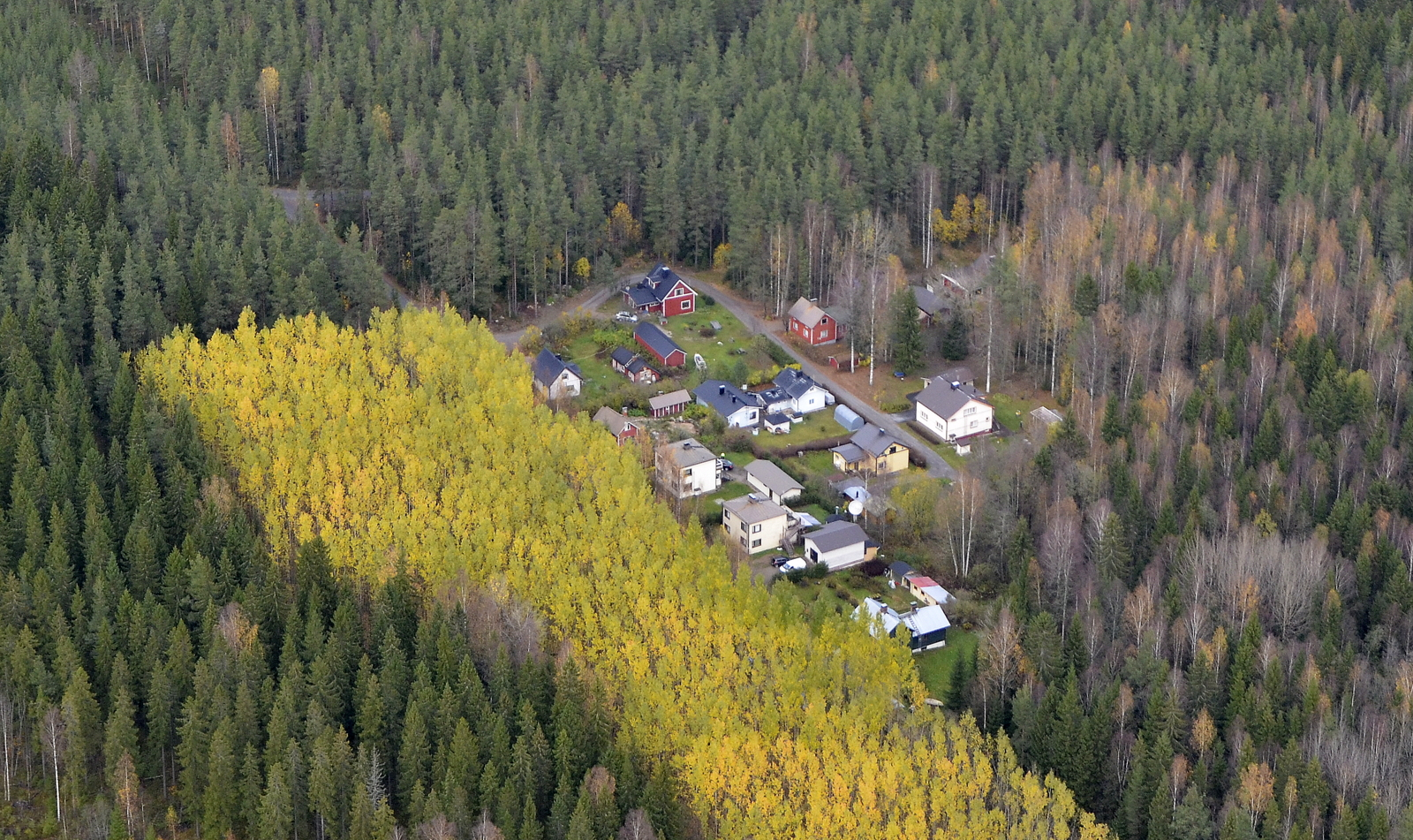 """Tehtaiden läheisyydessä sievä """"yhteisö"""" metsän keskellä. Pakokangas."""